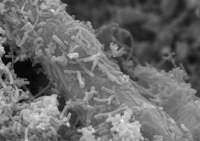 Российские ученые разработали биокомпозитный материал для очистки сточных вод.